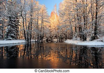 reflexão, dourado, luz solar