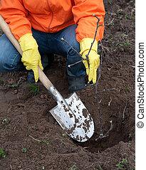 resetting, árvore, solo, jardineiro
