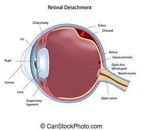 retinal, separação, eps8