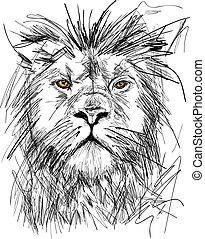 retrato, mane, esboço, leão, ricos, grande, adulto