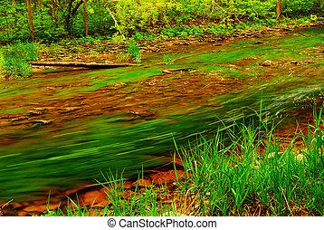 rio, floresta