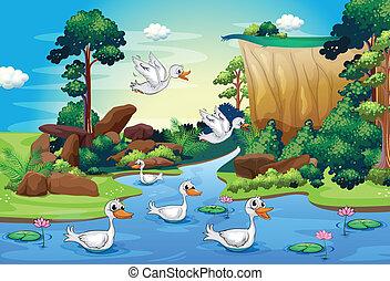 rio, grupo, floresta, patos