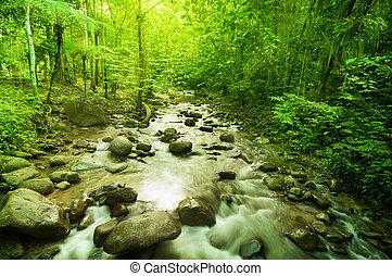 rio, selva