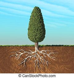 root., árvore, cone