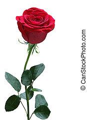 rosa, único
