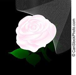 rosa, abstratos, véu, branca