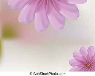 rosa, concha, fundo, pétala cor-de-rosa, flor