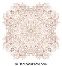 rosa, concha, fundo, pétala, flor branca
