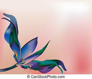 rosa, concha, pétala cor-de-rosa, flor azul
