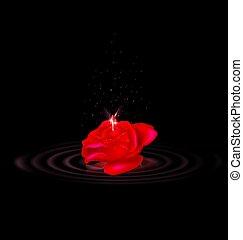 rosa, fada, escuridão, vermelho