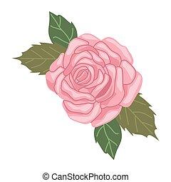 rosa, flor, cor-de-rosa, primavera