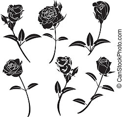 rosa, flor