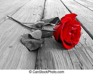 rosa, madeira, bw