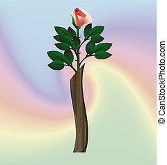 rosa, vaso