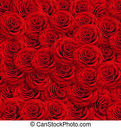 rosas, backgroud