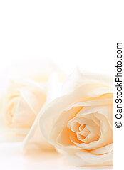 rosas, experiência bege