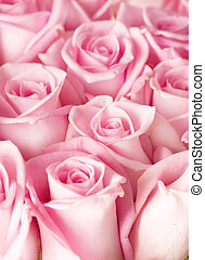 rosas, fundo