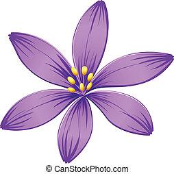roxo, five-petal, flor