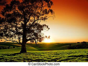 rural, pôr do sol