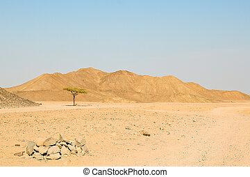 só, árvore, deserto