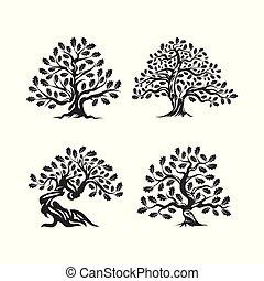 sagrado, silueta, experiência., logotipo, árvore, carvalho, isolado, branca, enorme