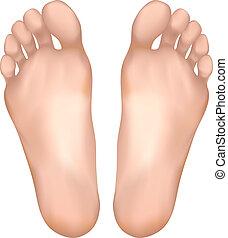 saudável, feet.