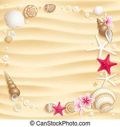 seashell, fundo