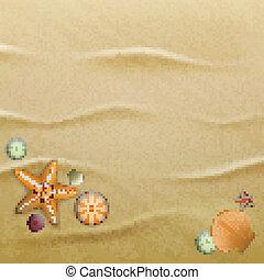 seashells, areia, fundo