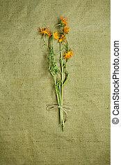 secado, medicina, calendula., herbs., herbário, medicinal, phytotherapy
