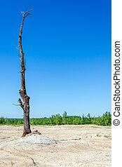 secos, árvore