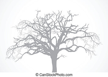 secos, árvore, vetorial, antigas, carvalho, -, morto, sem, nu, corvo, silueta, folha