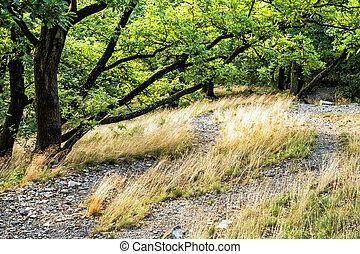 secos, árvores, decíduo, floresta verde, capim, verão