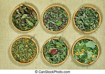 secos, phytotherapy, herbs., medicina, herbário, medicinal