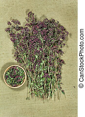 secos, phytotherapy, herbs., oregano., herbário, medicinal, medicina