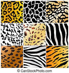selvagem, padrões, animais, pele