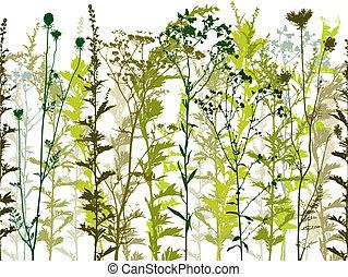 selvagem, plantas, natural, weeds.