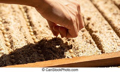 sementes, jardim, plantar, jardinagem, mão, crescendo, café, semear, agricultura, solo, concept., fazendeiro, solo, metáfora