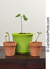 ser, primavera, pronto, replanted, plantas, jovem