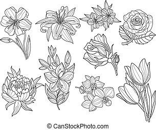 set., ilustração, vetorial, flor, mão, desenhado