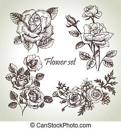 set., rosas, floral, ilustrações, mão, desenhado