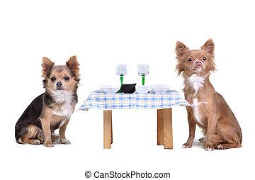 seu, desfrutando, cachorros, refeição