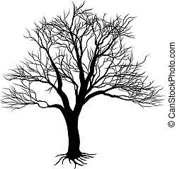 silueta, árvore nua