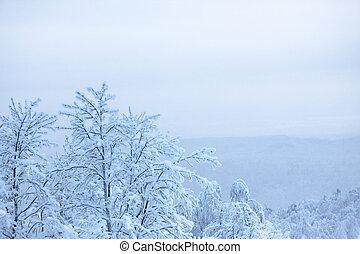 snow., fresco, árvores inverno, coberto