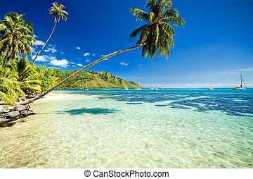 sobre, árvore, impressionante, palma, lagoa, penduradas