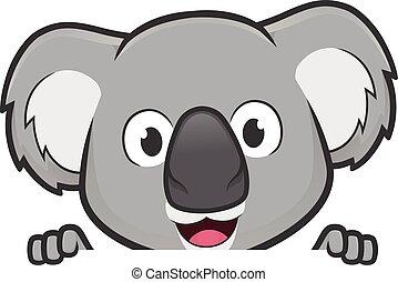 sobre, olhar, em branco, segurando, placa sinal, koala