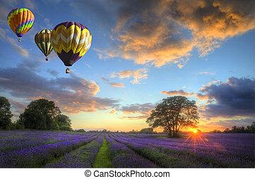sobre, voando, lavanda, ar, quentes, pôr do sol, balões, paisagem