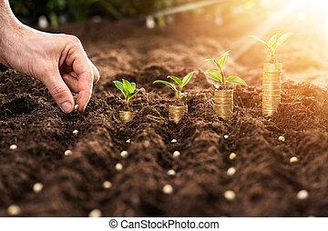solo, fazendeiro, mão, sementes, plantar