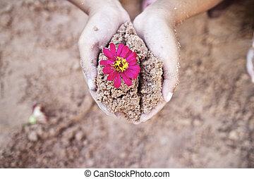 solo, mão., árvore, seu, plantar