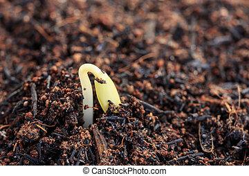 solo, planta, verde, jovem