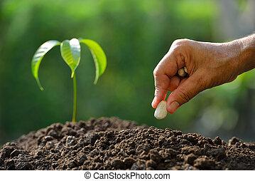 solo, sementes plantando, mão, fazendeiro